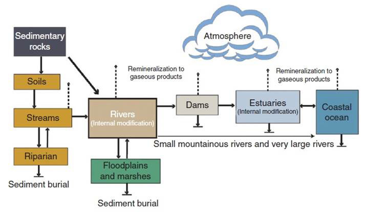 Figure 14. Potential sources and pathways of introduction of terrestrial dissolved organic carbon (DOC) and particulate organic carbon (POC) to the coastal ocean via watersheds, rivers, and estuaries. DOC and POC are the components of TOC. Also shown are the potential losses from natural (e.g. remineralization and sedimentation) and anthropogenic (e.g., damming and watershed modification) factors. Figure and caption: Bauer and Bianchi 2011