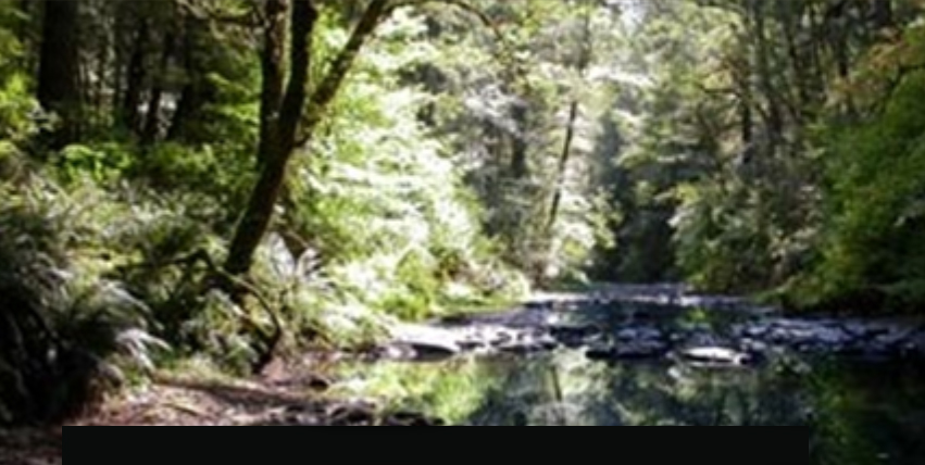 Salmon  spawning  habitat  Photo:  Umpqua  Watershed