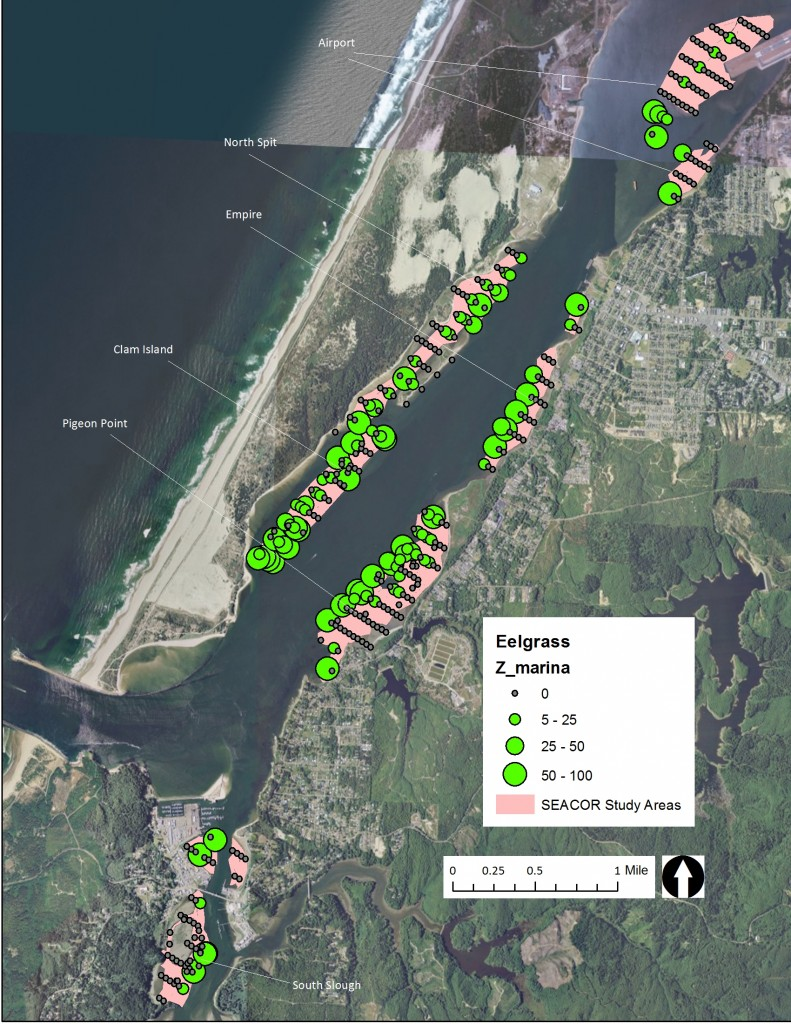 Figure 11. Eelgrass cover in the SEACOR study areas. Data: ODFW 2014.