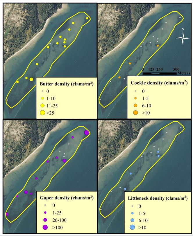 Figure 6. Clam distribution and abundance (clams/m2) at the SEACOR Clam Island study site. Note the difference in scale for each clam species. Data are from DAM surveys only. Data and figure: ODFW 2014.