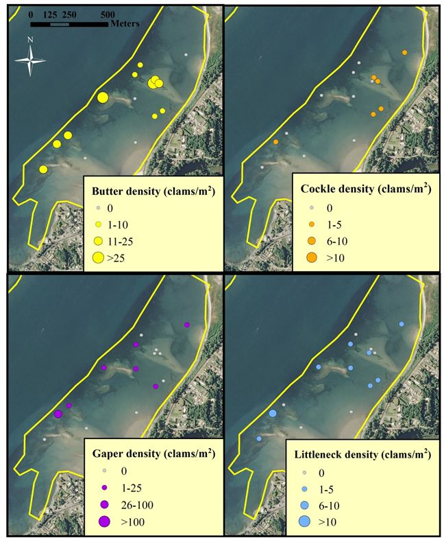 Figure 7. Clam distribution and abundance (clams/m2) at the SEACOR Pigeon Point study site. Note the difference in scale for each clam species. Data are from DAM surveys only. Data and figure: ODFW 2014.