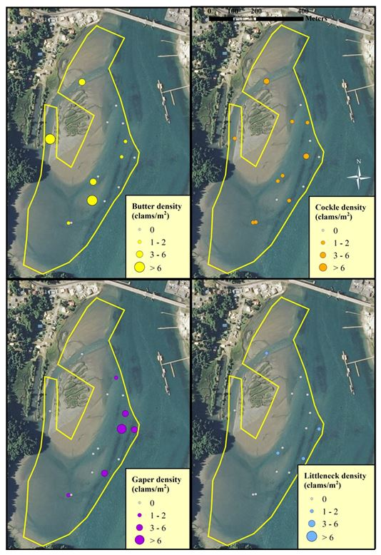 Figure 8. Clam distribution and abundance (clams/m2) at the SEACOR South Slough study site. The scale for each clam species is the same. Data are from DAM surveys only. Data and figure: ODFW 2014.