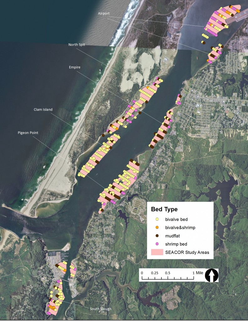 Figure 9. Intertidal bed type in the SEACOR study areas. Data: ODFW 2014.