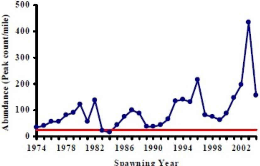 Figure 14. Historic abundance of adult fall Chinook salmon in the Coos River in number of observed fish (both live and dead) per mile at peak count. Benchmark necessary to pass ONFSR abundance criteria is highlighted in red. Graph: ODFW 2005a