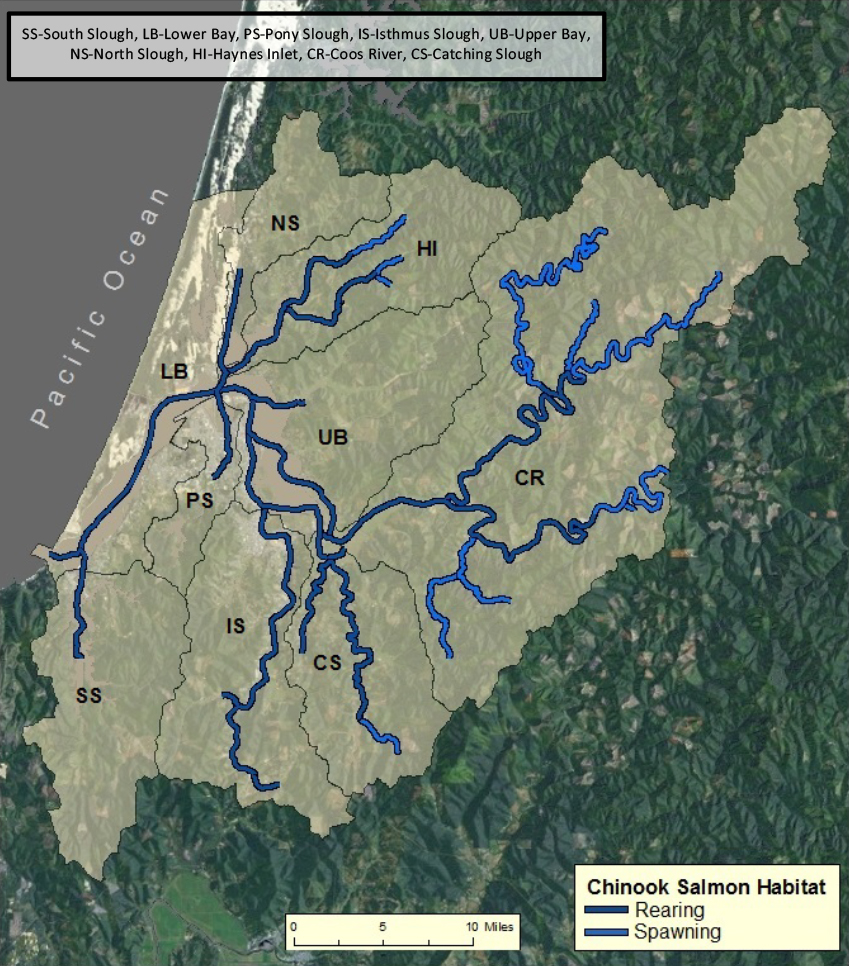 Figure 4.  Spatial extent of Chinook salmon. Data: ODFW 2013b