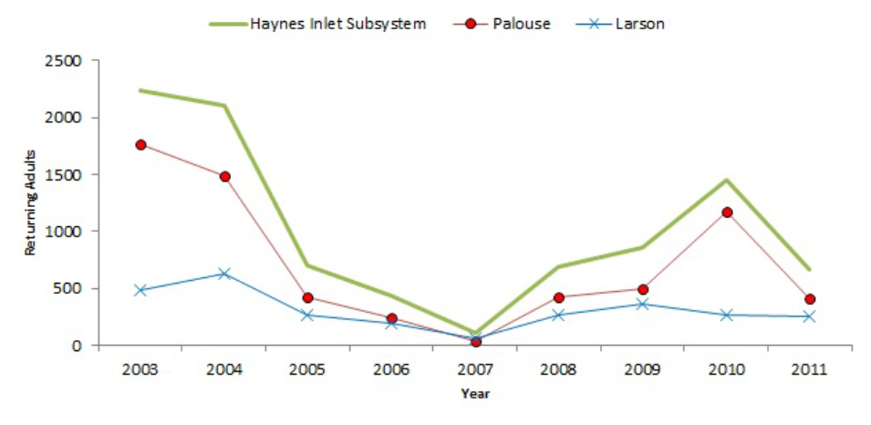 Figure 8. Trends in adult Coho returns to the Haynes Inlet  subsystem. Data: CoosWA 2013a