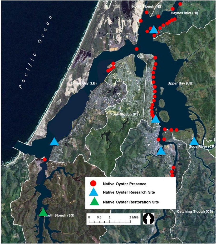 Figure 1. Status of native oysters in the Coos estuary in the South Slough, Lower Bay, North Slough, Haynes Inlet, Upper Bay and Isthmus Slough subsystems.