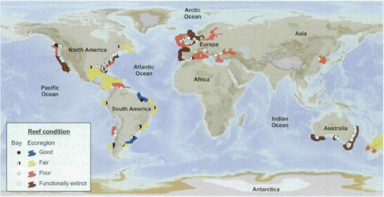 Figure 4. Condition of the world's oyster reefs.  99% lost = functionally extinct. GRAPHIC: Beck et al. (2011)