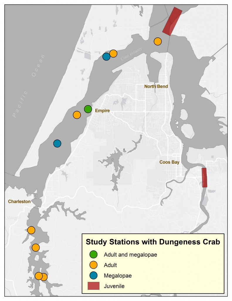 Figure 5. Study stations where Dungeness crabs were found during surveys . Data from deRivera et al. 2005, Ramsay 2012 and Miller et al. 1990.