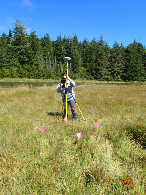 Tidal marsh elevation data collection.  SSNERR Photo.