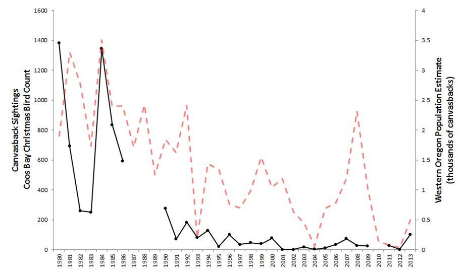 Figure 13. Indicators of canvasback abundance in the Coos estuary (black) and across western Oregon (red)(1984-2012). Data gaps in CBC data exist for years during which the Count was not conducted (2010) or not reported (1987-89). Data: Audubon 2014, Rodenkirk 2012, USFWS 2014a; Sketch: Csuti et al. 1997