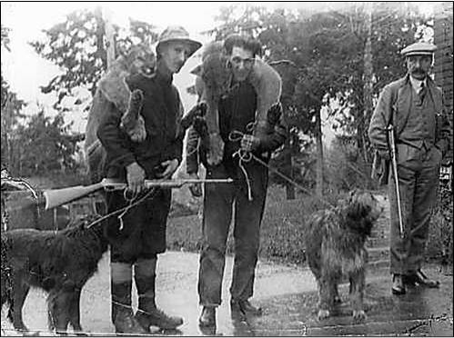 Figure 16. Cougar bounty hunters in British Columbia in the early 20th century. Cecil Smith (left) enjoyed some notoriety for his effectiveness as a cougar bounty hunter. Figure: KnowBC n.d.