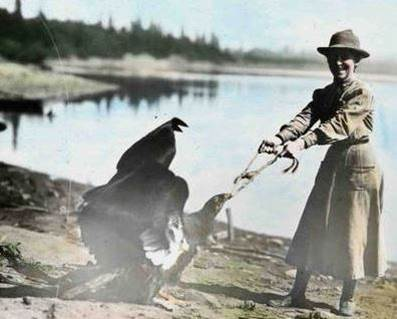 "Figure 17. Irene Finley taunts a young condor known as ""General"" by playing a game of keep-away at her home along the banks of the Willamete River near Portland, Oregon circa 1906. Figure and Caption: D'Elia and Haig 2013"