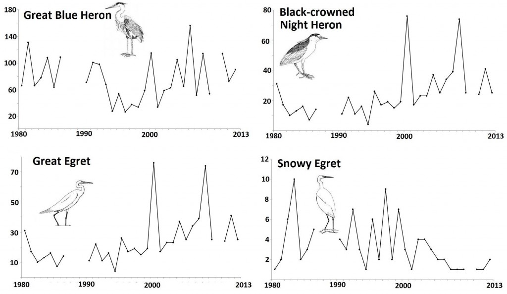 Figure 18. Common wading bird species that display neither clearly increasing nor clearly decreasing population trends in the Coos estuary (1980-2013). Data gaps in CBC data exist for years during which the Count was not conducted (2010) or not reported (1987-89).Data: Audubon 2014, Rodenkirk 2012; Bird Sketches: Csuti et al. 1997