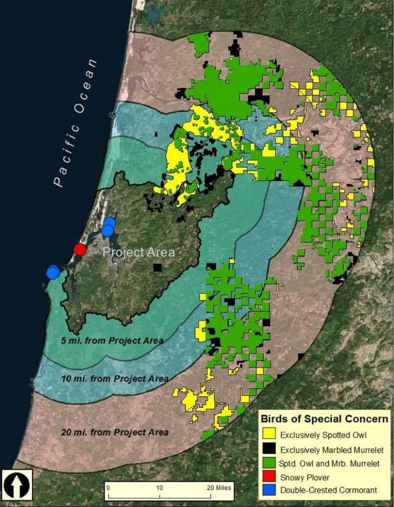 Figure 1. Bird habitat of special concern within the lower Coos watershed (Project Area), including critical habitat designation for the marbled murrelet (black), the northern spotted owl (yellow) as well as the location of double-crested cormorant colonies (blue) and snowy plover habitats (red). Plover habitats and cormorant colonies not to scale. Data: USFWS 2011, 2012, 2014c, 2014a; Naughton et al. 2007