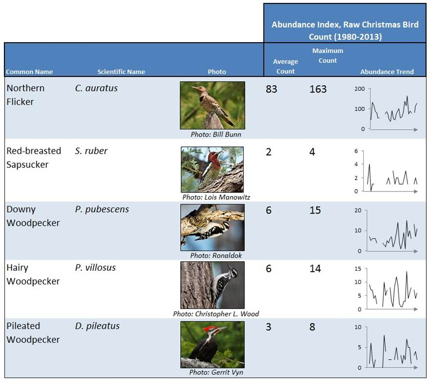 Table 4. This table summarizes raw CBC data for some of the most commonly occurring woodpeckers in the Coos estuary. Time series graphs (right) showing increasing trends (1980-2013) are presented. Data: Audubon 2014, Rodenkirk 2012; Photos: Cornell 2014