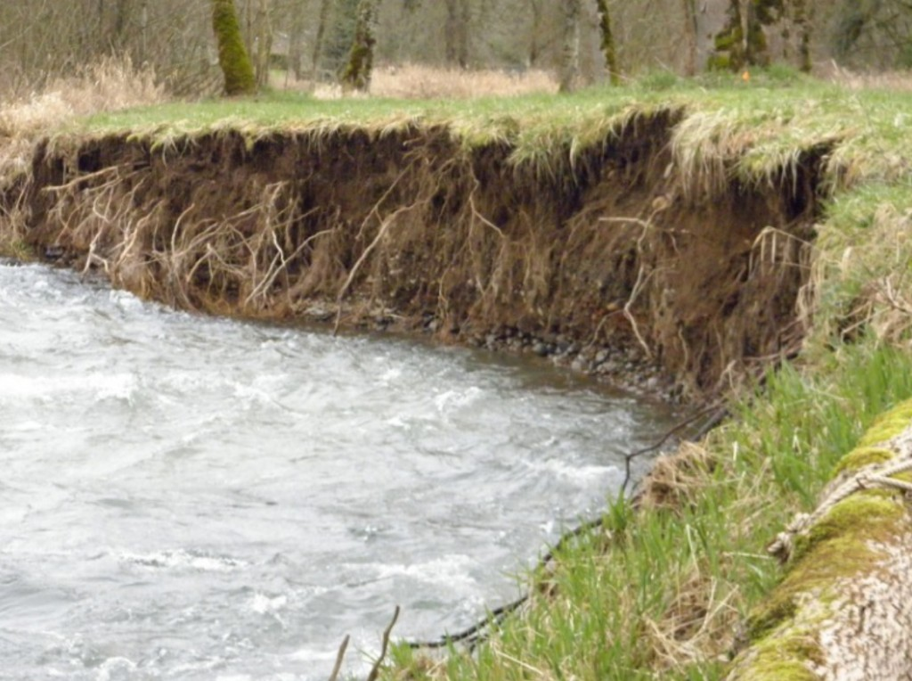 Figure 29. An eroding stream bank on the Oregon coast, which has been facilitated by the removal of stream bank vegetation. Source: Clackamas County Soil and Water Conservation District 2015