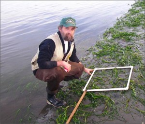 Figure 2. Scientist using a quadrat and meter stick to estimate percent cover, density, and canopy height of a Coos estuary eelgrass meadow.