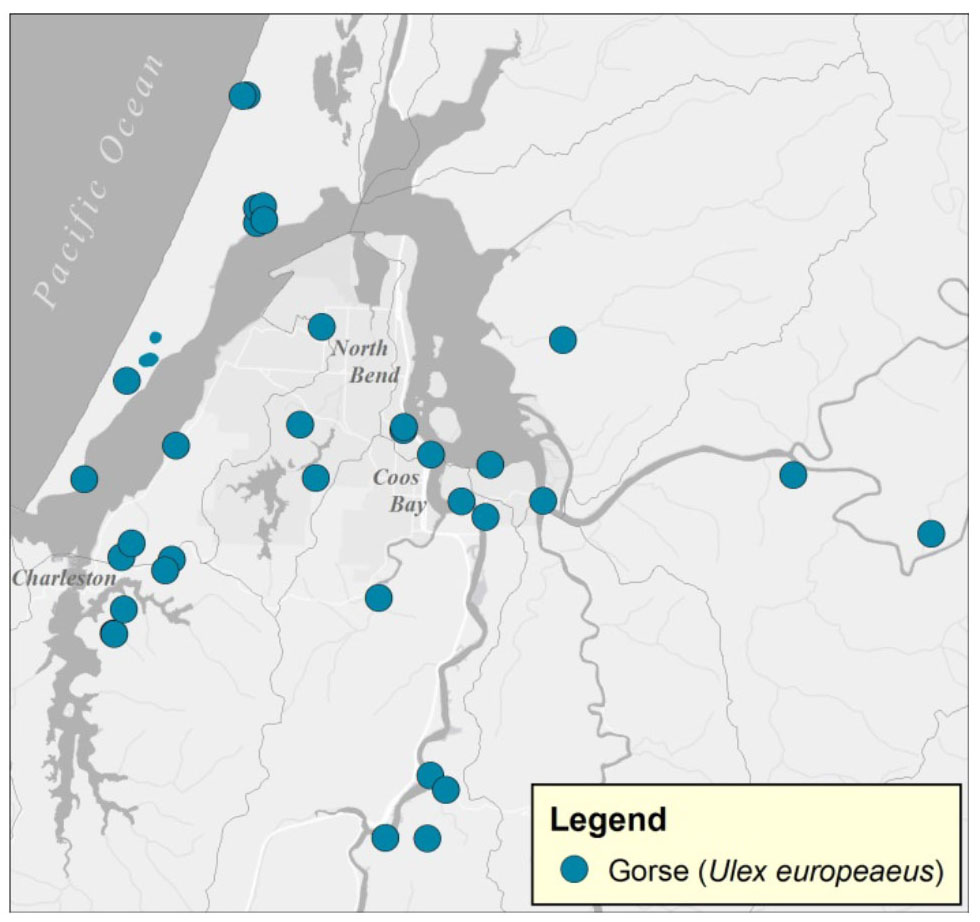 Figure 11. Known locations of gorse (Ulex europeaeus) infestations in the project area. Sources: ODF 2014a; EDDMapS 2015; CoosWA 2014a