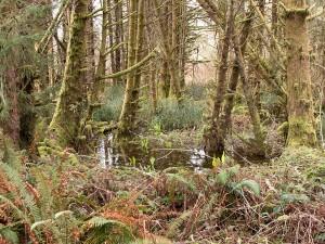Top: Mature Douglas-fir forest  Bottom: Sitka spruce swamp