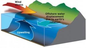 Figure 10. Depiction of coastal upwelling forces along Oregon's coast. Source: NWFSC 2015.